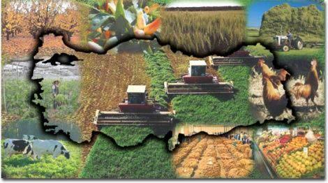 Türkiye'de Tarımsal Pazarlama
