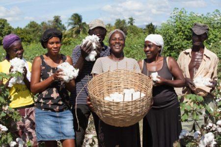 Timberland Haiti'de 30 Yıldır Ölü Olan Pamuk Üretimini Canlandırıyor