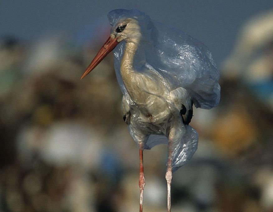 Plastik Poşet, Neden Parayla Satılıyor?
