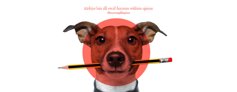 Türkiye'nin İlk Evcil Hayvan Ajansı: thepetagency