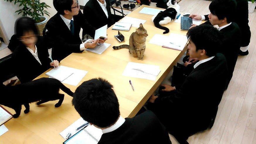 Japon Şirketi, İş Stresini Azaltmak İçin Ofiste Bir Sürü Kedi Besliyor