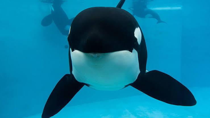 TripAdvisor'dan Hayvan Hakları Adına Alınmış Güzel Karar