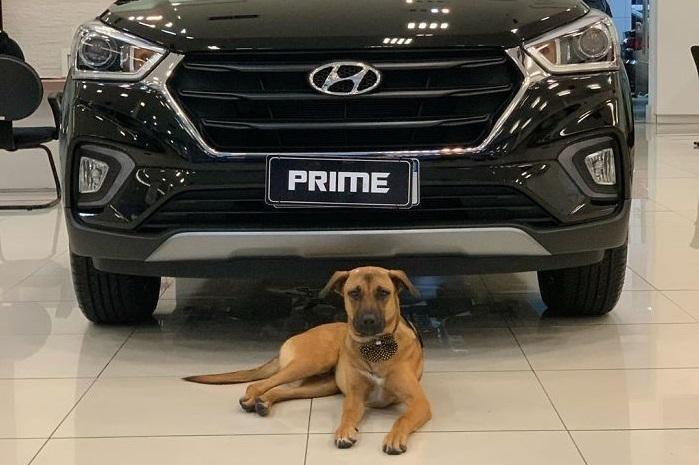 Hyundai Bayisi, Sahipsiz Köpeği İşe Aldı